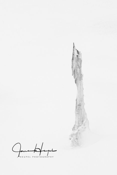 Rooted in Snow 7/50
