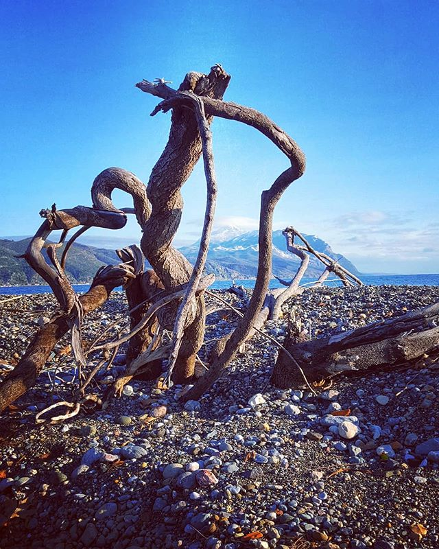 This gnarly tangle of tree roots were wa