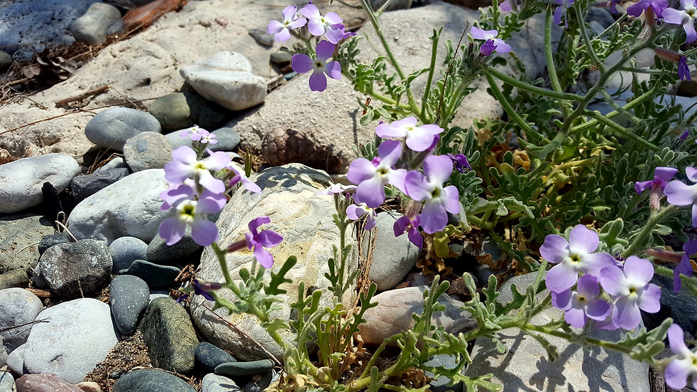Little flowers growing on the beach