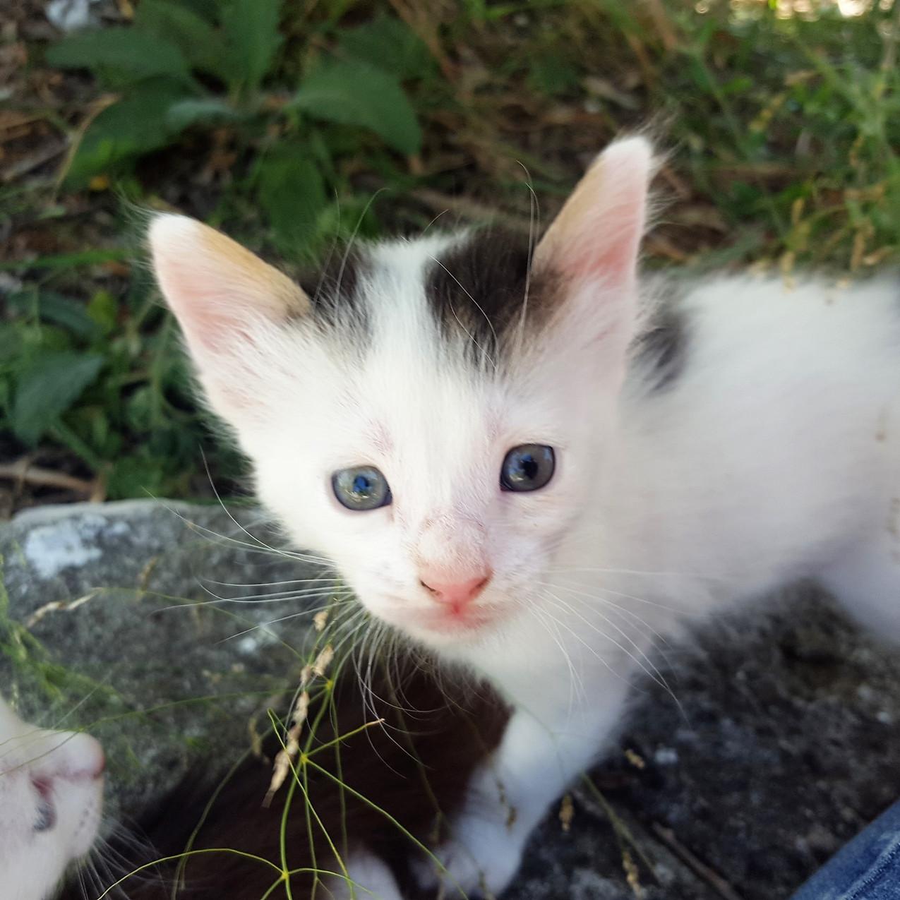Boy kitty 29 June 2020