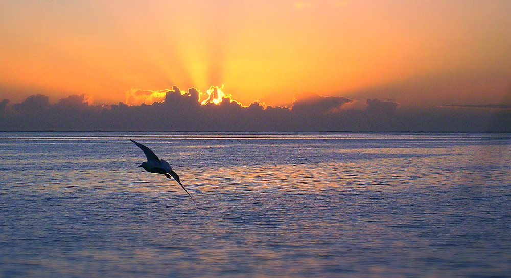 Sunrise at Lady Musgrave Island off Queensland, Australia