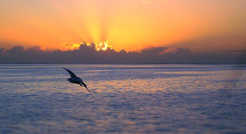 Sunrise at Lady Musgrave Island off Queensland, Australia