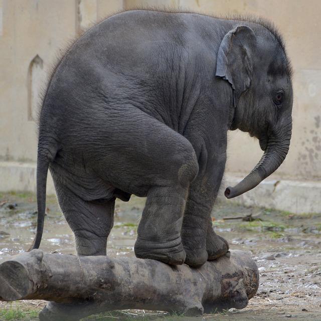 elephant-1005475_640