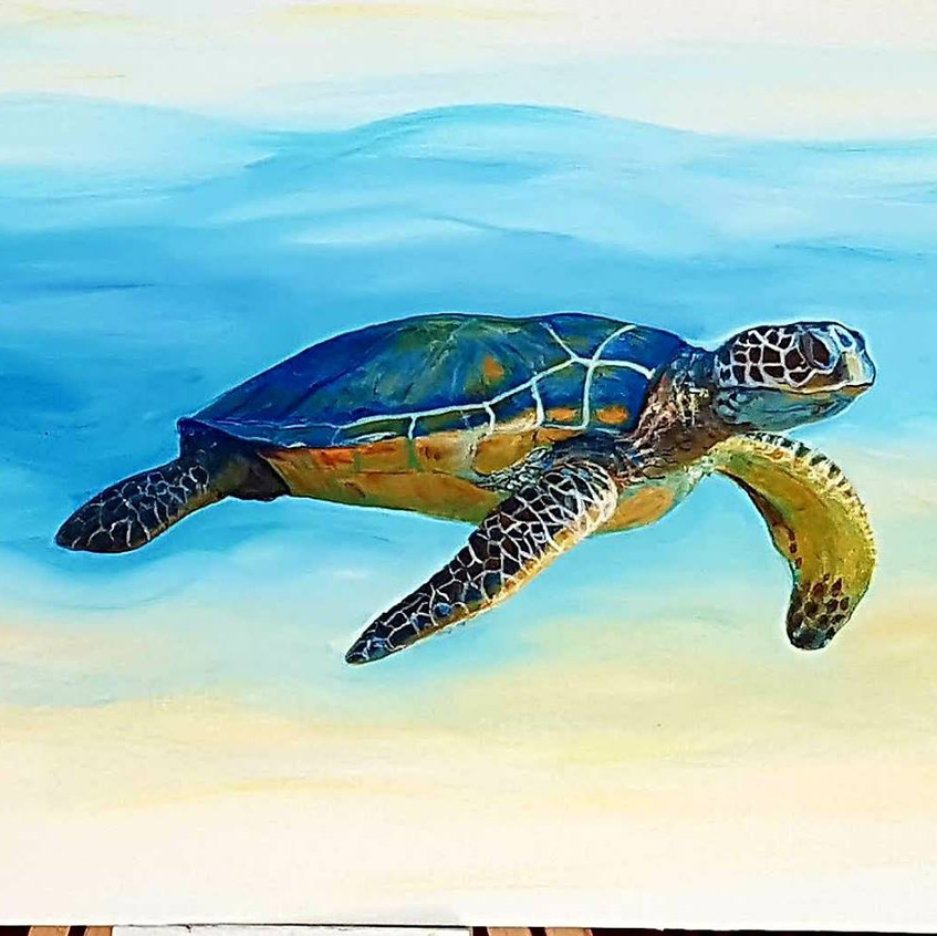 Mr turtle lovely