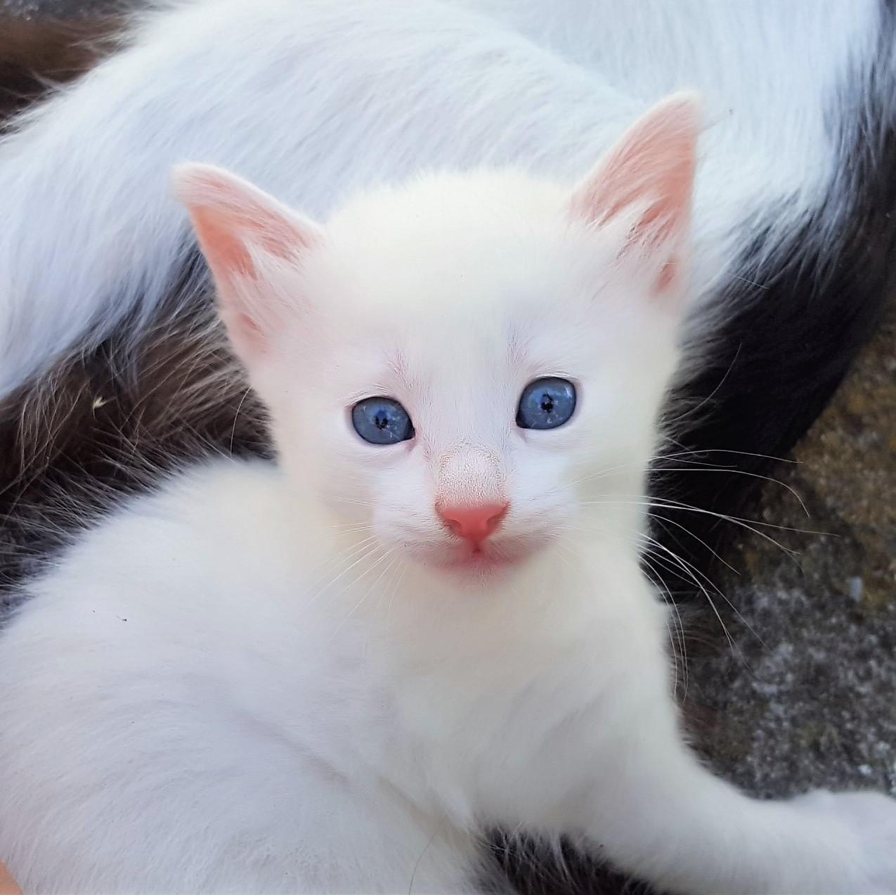 Girl kitty 29 June 2020