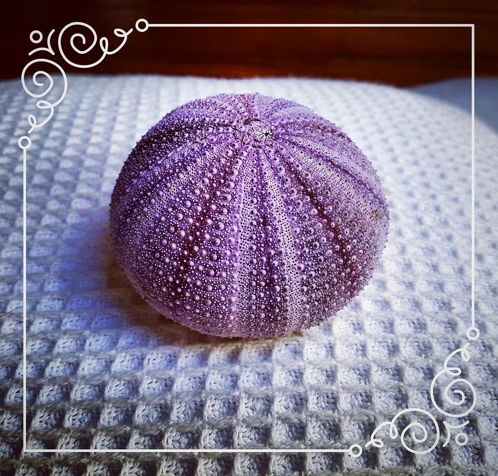 Sea's gift - perfect urchin skeleton