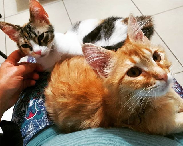 Kittens at the doctors