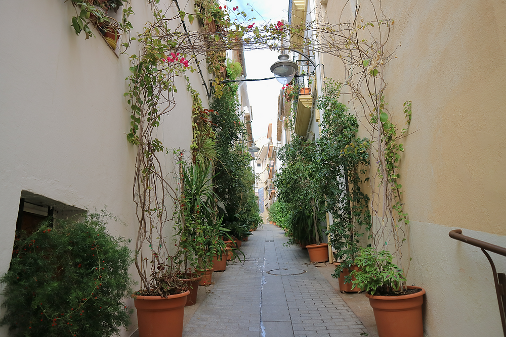 The plant lined alleway in Javea old town
