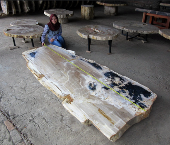 Petrified Wood Table Top Slab