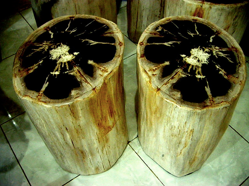 Petrified Wood Side Table Full Polished