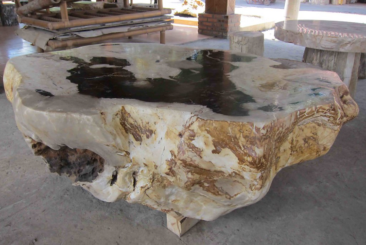 Fossilized Coffee Table