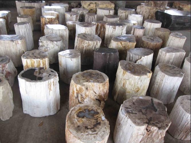 Petrified Wood Stump End Table