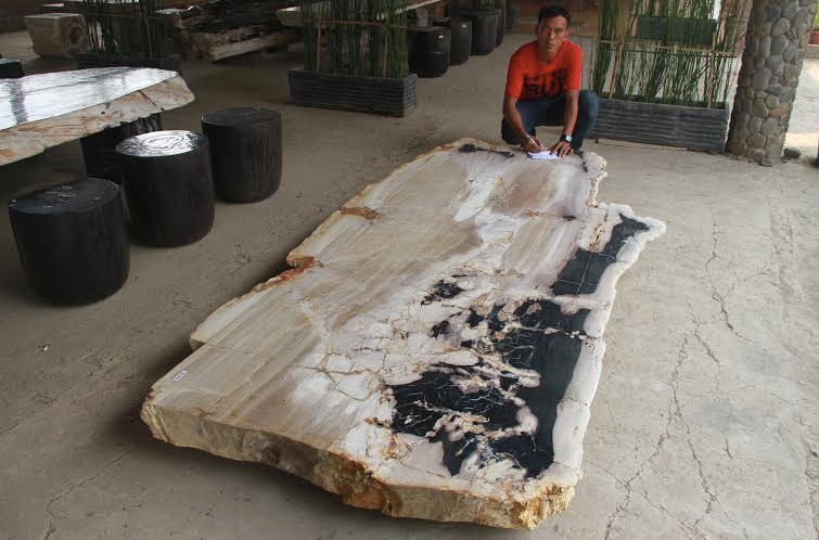 Petrified Wood table top