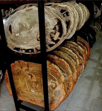 Petrified Wood Slabs for sale