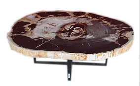 Petrified Wood Slab Coffee Table