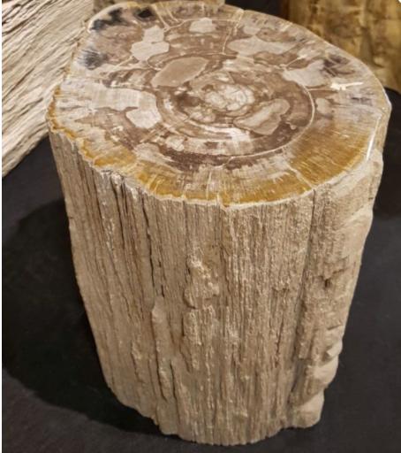 Petrified Log Stool