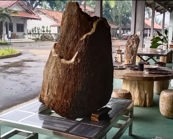 Petrified Palm Wood