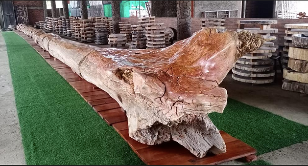 Petrified Tree for sale.png