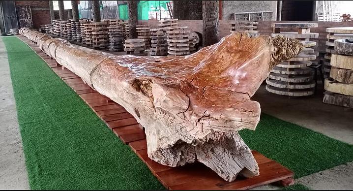 Petrified Tree for sale