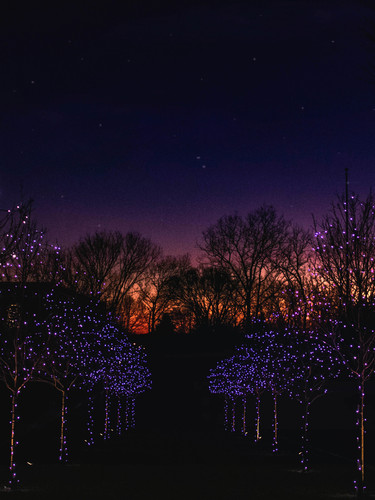 MSH_Christmas-Lights_2019_E2_08.jpg