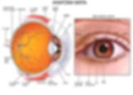 eyediagram.jpg