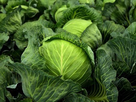 今が旬の野菜でがん予防!?