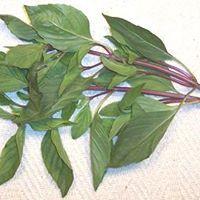 thai basilicum.jpg
