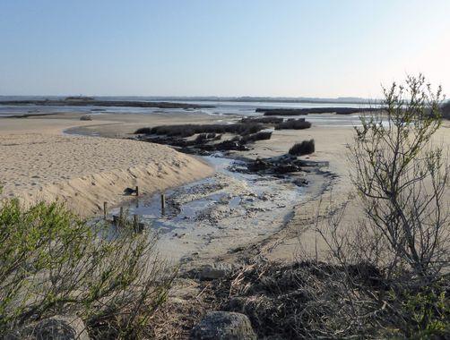 le sentier du littoral Le Teich
