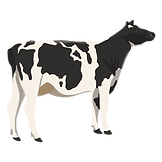 cow illustration.png