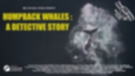 Humpback Whales A Detective Story TX CAR