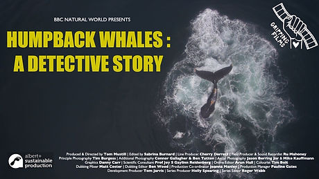 Humpback Whales A Detective Story TX CAR