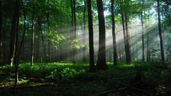 quiet-forest-298406.jpg