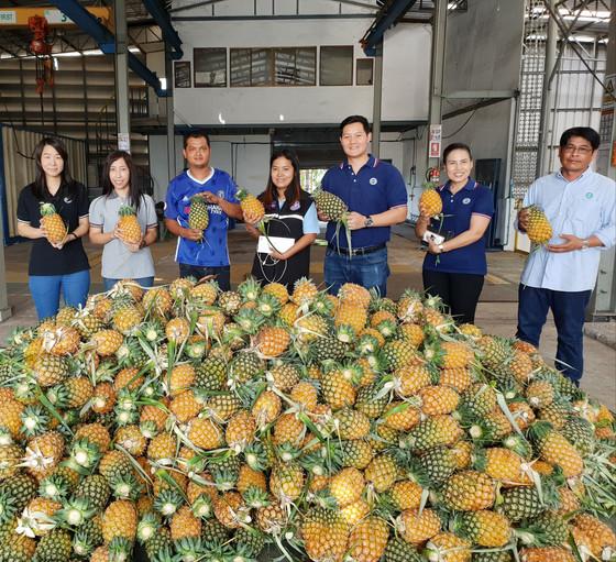 กงพัฒนาฯร่วมกับอุตสาหกรรมระยองสนับสนุนชาวสวนผลไม้จังหวัดระยอง