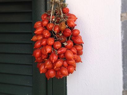 tomatolevigne.jpg