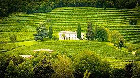vineyardslope.jpg
