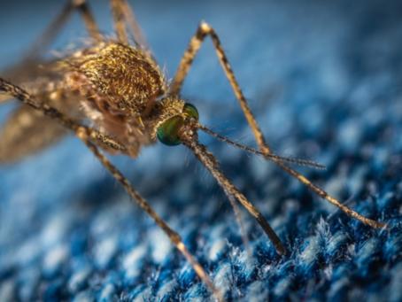 Os sintomas da malária.