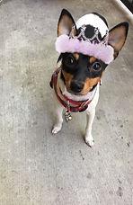 Our Mascot Bella