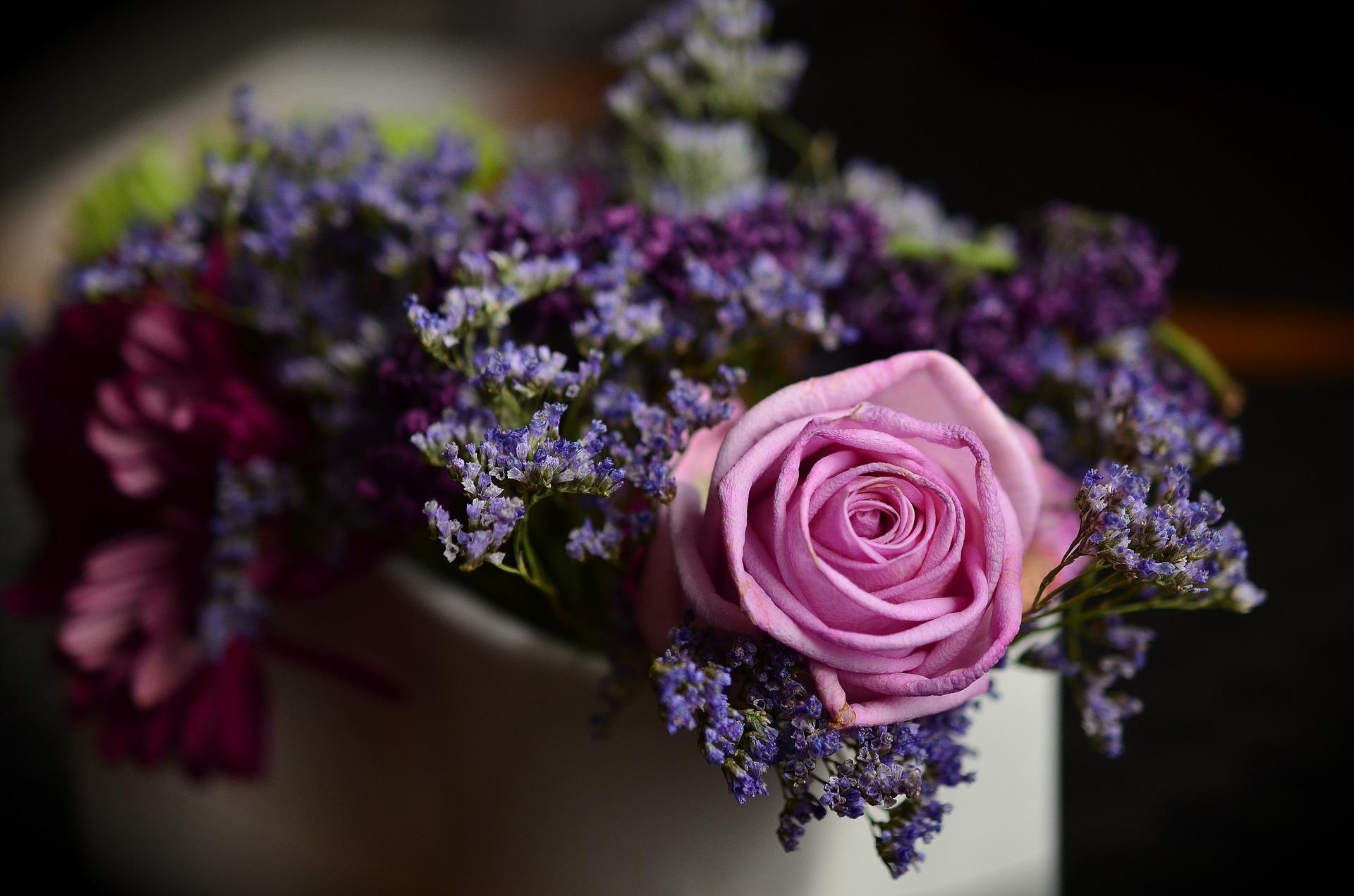 rose-1405552_1920