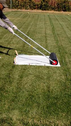 TTR Study Modified California Roller