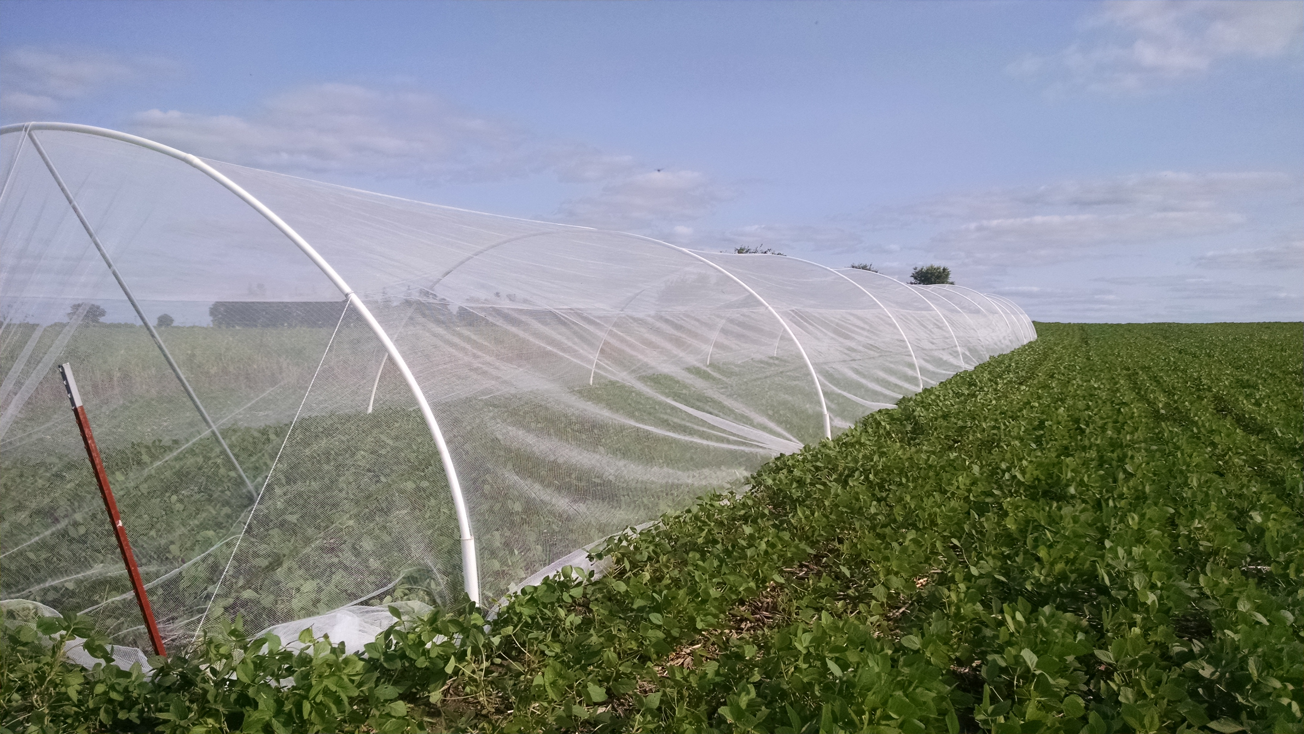 Soybean Pollinator Study