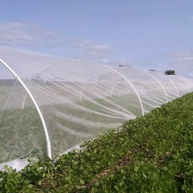Soybean Tunnel for Nectar Collection using Bees