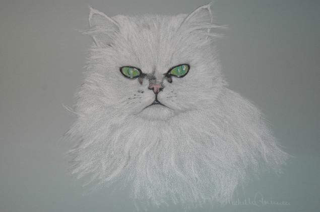 Feline II