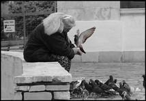 Pigeons in Heraklion, Crete, Greece