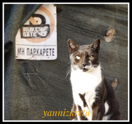 The cats of the island of Crete, Greece