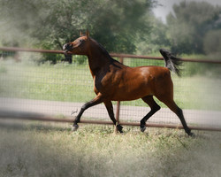 Barakis Gem Trotting