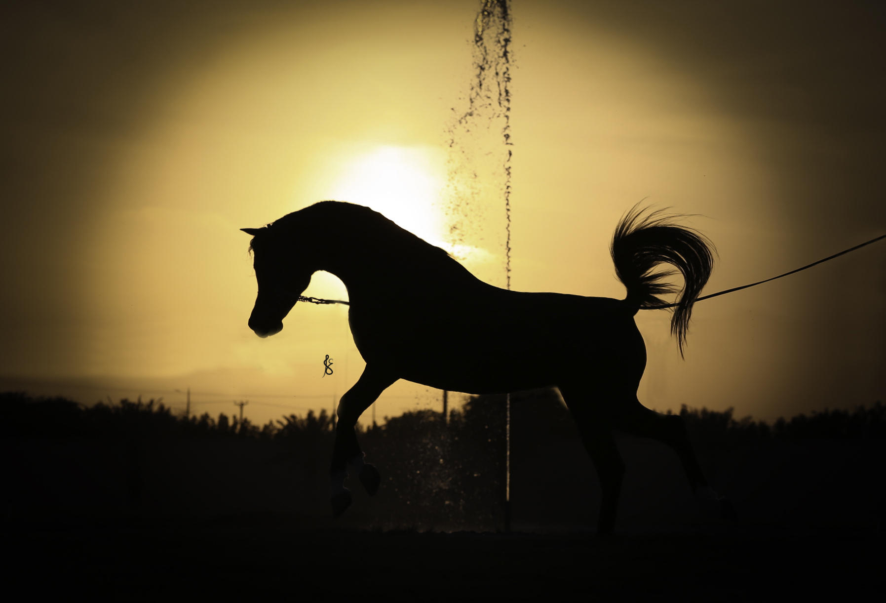 Stunning Silhouette in Kuwait