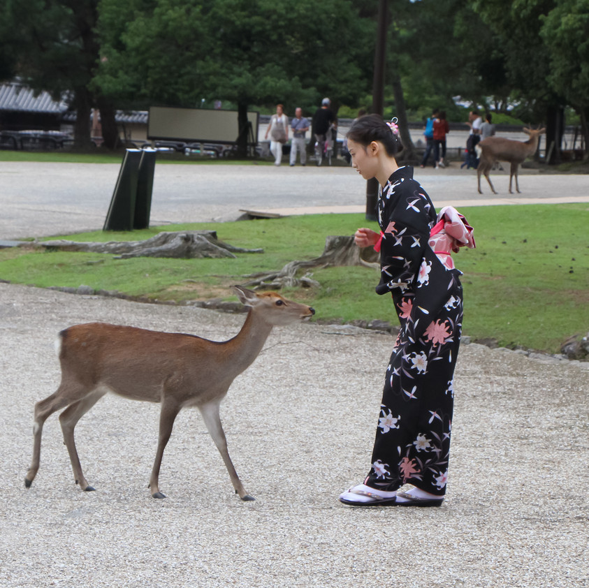 Deer petting
