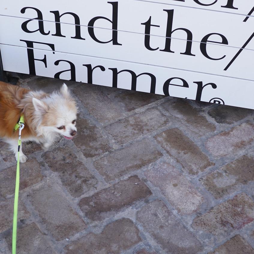 Jezebel examines the sidewalk