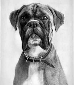 Pet Portrait pencil dog drawing