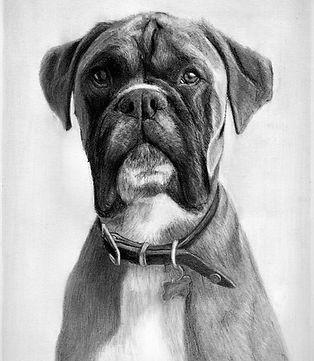 Pet Portrait pencil dog drawing